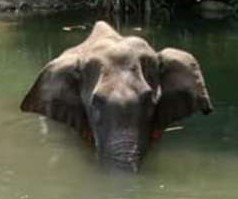 This image has an empty alt attribute; its file name is kerala-elephant-final-1591274173.jpg